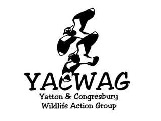 Yatton & Congresbury Wildlife Action Group