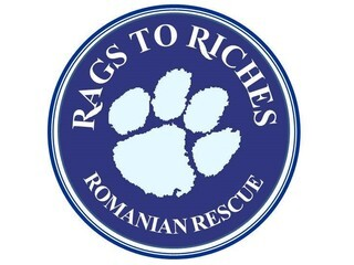 Rags To Riches Romanian Dog Rescue