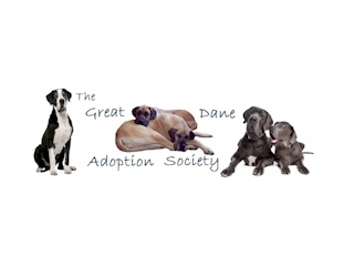 GREAT DANE ADOPTION SOCIETY