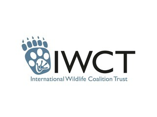 International Wildlife Coalition Trust logo