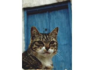 Greek Cat Welfare Society logo